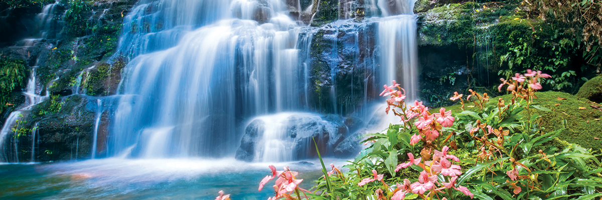 beautiful waterfall with pink snapdragon flower in foreground